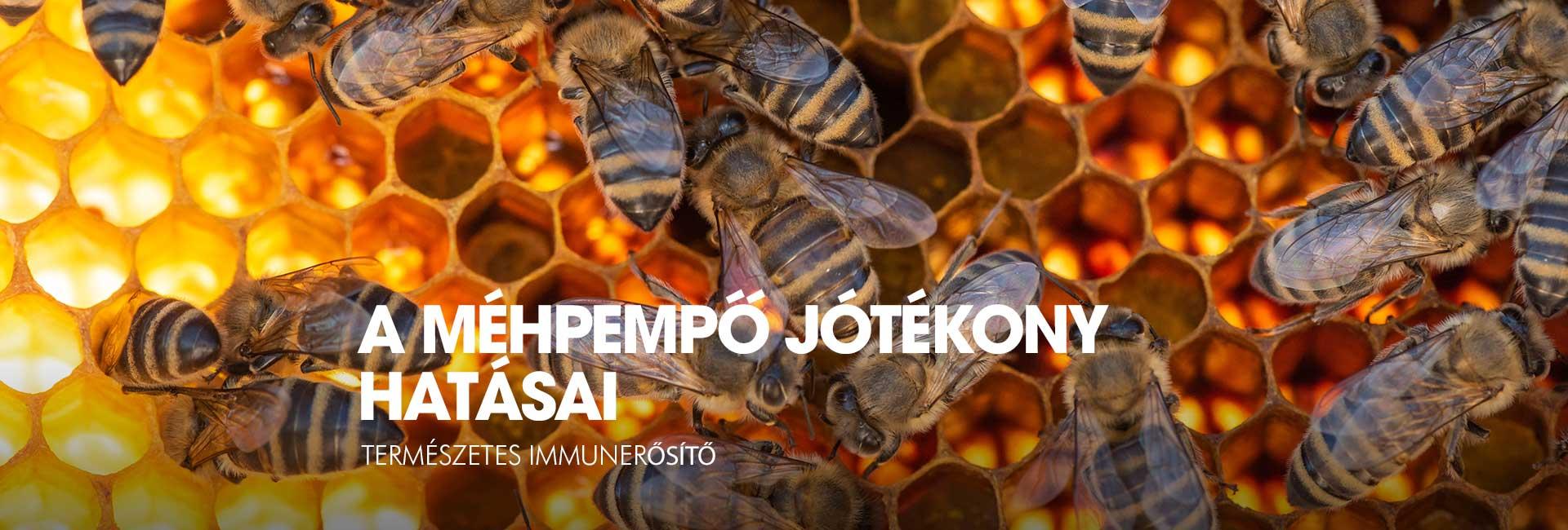 mehpempo-hatasai4